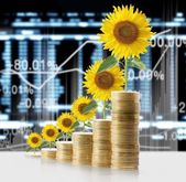 Close up Sun flower growing from coins — Stock Photo