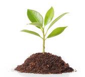 árbol de la planta — Foto de Stock