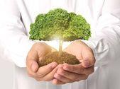 Affärsman hålla träd groning — Stockfoto