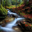 Autumn forest with the fast river — Stock Photo