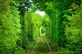 Tunnel of love — Stock Photo