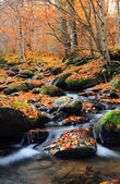 Water scape of Autumn — Stockfoto