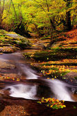 Forest river with leaves — Stock Photo