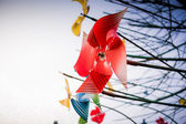 Pinwheel tree — Stock Photo
