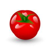 Fresh tomato isolate on white — Stock Vector