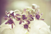 Crown flower with color filters — Stock Photo