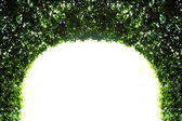 Abstract green arch background — Stock Photo