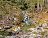 The Tartagine river near Mausoleo in northern Corsica — Stock Photo
