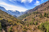 Forest and snow covered mountains from Asco valley in Corsica — Stock Photo