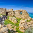 A border collie stands on an old building on the coast of Corsic — Stock Photo