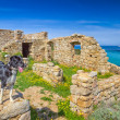 A border collie stands on an old building on the coast of Corsic — Stock Photo #44787255