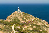 Revellata lighthouse with flowers and maquis near Calvi in Corsi — Stock Photo