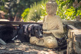 Dog and cat rest on a  Buddha statue on stone steps — Stock Photo