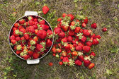 Fresh strawberry photo — Stock Photo