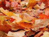 Grass, nature, red, autumn, fall, season — Stock Photo