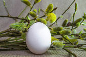 Egg, willow, pussy-willow, branch, fluffy, white, bud — Стоковое фото