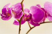 Flowers, orchid, isolated, flower, nature, plant, petal — Stock Photo