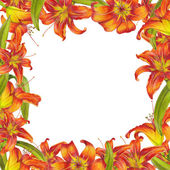 Frame of lilies — Stockfoto