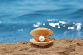 Shell with a pearl — Stock Photo