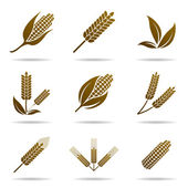 Wheat and rye. Elements for design. Icon set. — Stok Vektör
