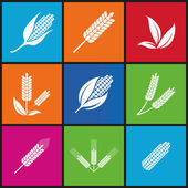 Wheat and rye. Elements for design. Icon set. — Stock Vector