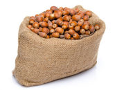 A lot of hazelnuts in a burlap bag — Stock Photo
