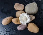 Composition of pebbles with a white flower — Stock Photo