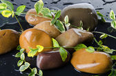 Composition of pebbles with green plants — Stock Photo