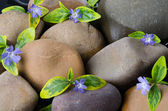 Pebbles with blue flowers — Stock Photo
