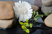 Pebbles and a white flower — Stock Photo
