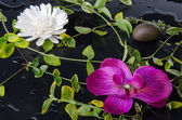 Green plants with a purple and a white flower — Stock Photo