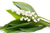 Bouquet of lilies — Stock Photo