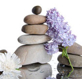 Composition of stacked pebbles with lilac — Stock Photo