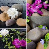 Collage of different compositions with pebbles and flowers — Stock Photo