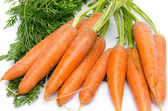 Bunch of fresh carrots with leaves — Foto de Stock