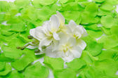 White orchid surrounded by green petals — Stock Photo