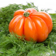 Beefsteak tomato on dill — Stock Photo #49321963