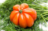 Beefsteak tomato on dill — Stockfoto