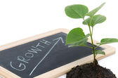 Growth concept with a green small plant — Stock Photo