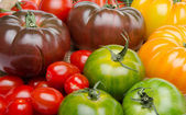 Different varieties of tomatoes — Stock Photo