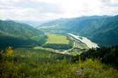 Altay mountains in summer — Stock Photo