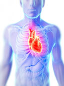 3d rendered illustration of the human heart — Stock Photo