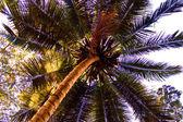 Vista di Palma — Foto Stock