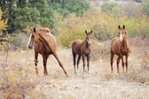 Wild horse family — Stock fotografie
