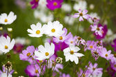 Beautiful flowers in the garden. Spring landscape — Stock Photo