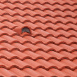 New roof tiles close up detail — Stock Photo