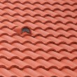 New roof tiles close up detail — Stock Photo #43744265