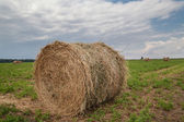 Round bales of straw on green field — Стоковое фото