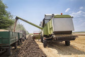 Harvest machine loading seeds in to tractor trailer — Stock Photo