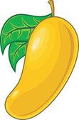 Orange mango — Stock Vector